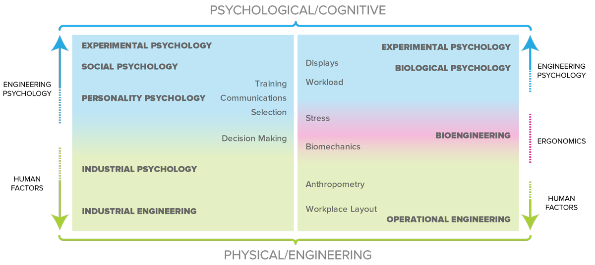 Web development is more within the realm of Engineering Psychology than Human Factors, as is illustrated in this graphic.